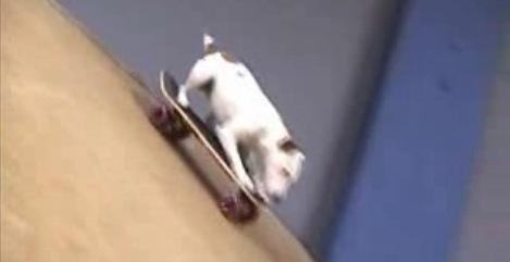 Un chien qui fait du skateboard