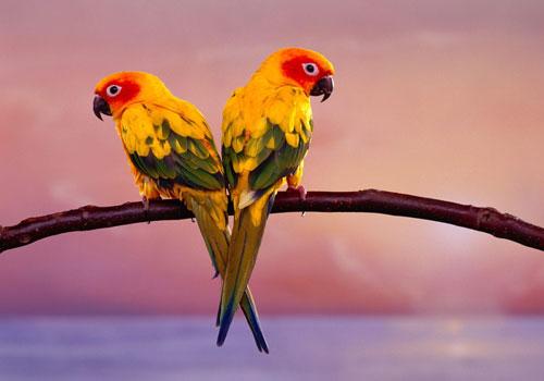 perroquet surdoué