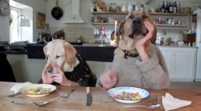 deux chiens mangent au restaurant