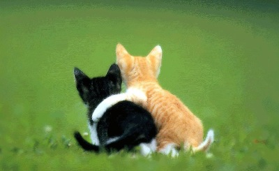 calin de chats