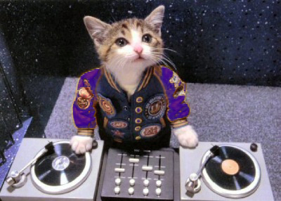 chats dj en video