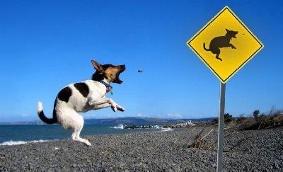 chien portier marrant