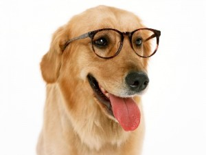 chiens marrants