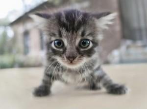 chat qui fait le ménage
