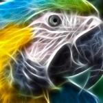 perroquet vs laser