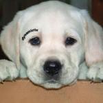 chien insolite