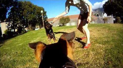 chien avec camera sur le dos