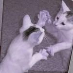 miroir vs chat