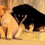 chiens dorment