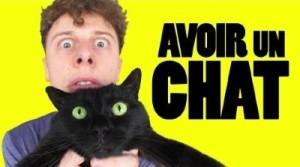 norman avoir un chat