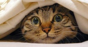 chat qui a peur